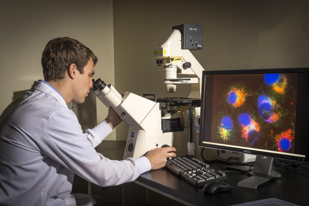 Researcher and microscope at the Philips Institute